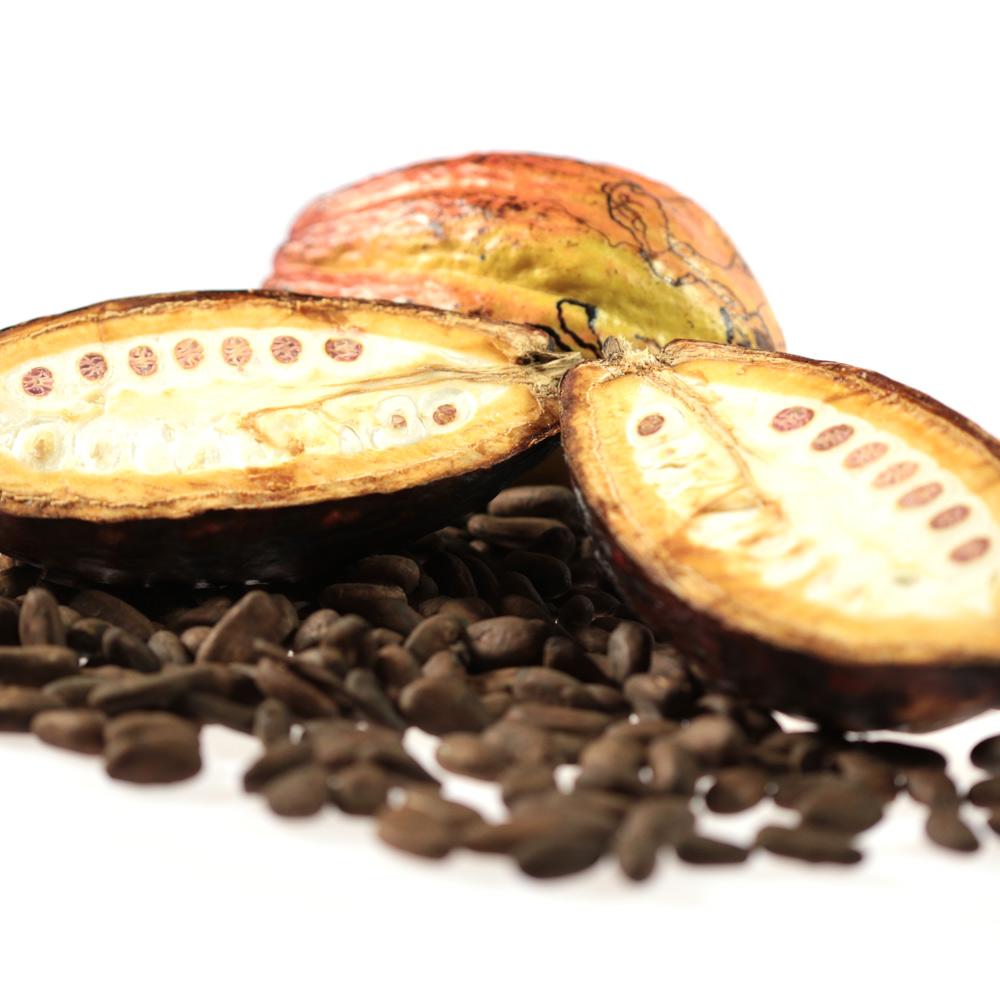 Введение в мир деликатесного шоколада